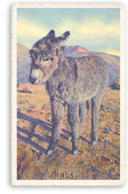Rags the Donkey in Taos, New Mexico